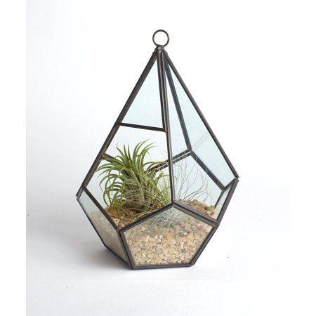Tear Drop Glass Terrarium Succulent /& Air Plant