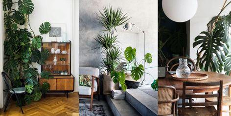 Piante Da Appartamento Design.Piante Da Interno Design Cerca Con Google Idee Arredamento