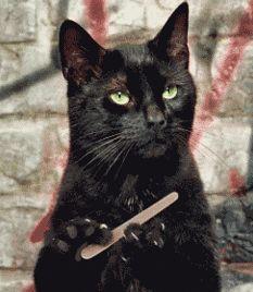 gatito con lima de uñas