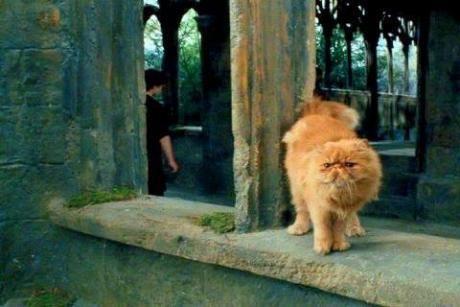 Erkennt Ihr Die Harry Potter Fabelwesen Harry Potter Asthetik Fabelwesen Wesen
