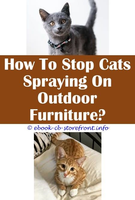 14 Majestic Cat Won T Stop Spraying House Admirable