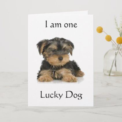 Yorkie Is One Lucky Dog Birthday Wishes Card Zazzle Com Dog Birthday Wishes Birthday Wishes Cards Birthday Wishes Greeting Cards