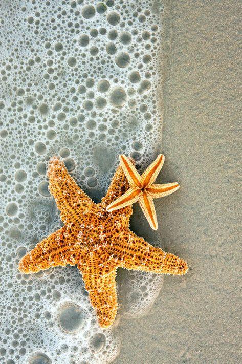 Starfish in the surf. Siesta Key, Florida on We Heart It Cute Wallpapers, Wallpaper Backgrounds, View Wallpaper, Magic Places, Whatsapp Wallpaper, Beach Aesthetic, Orange Aesthetic, Jolie Photo, Ocean Life