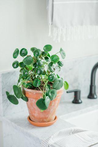 Epingle Sur Plants
