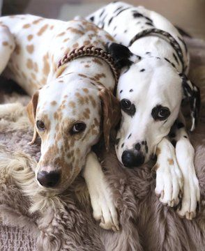 Khaleesi And Django Dogs Dog Rates Beautiful Dogs