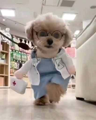 """""""Dr. Puppy Love coming to your assistance! Who called for me?"""""""