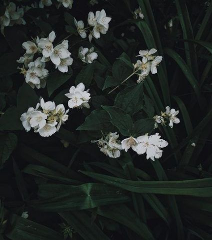 24 Ideas For Nature Aesthetic White And Green Nature Aesthetic Dark Green Aesthetic Flower Aesthetic