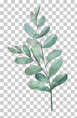 Watercolor Painting Leaf Illustration Watercolor Leaves Green Leafed Plant Png Clipart Leaf Illustration Floral Watercolor Background Watercolor Leaves