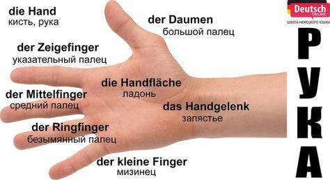 Nemeckij Yazyk Deutsch Online Tedesco
