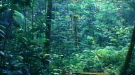 The Tropical Rainforests Of The World Are Home To Thousands Of