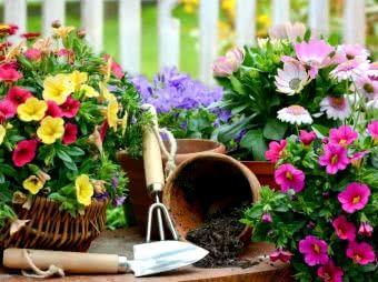 Kwiaty Balkonowe Terminarz Siewu Sadzenia I Kwitnienia Kwiatowe Ogrody Kwiaty Ogrod