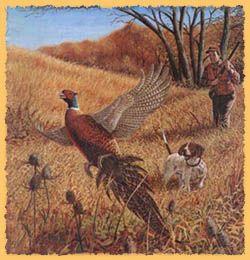 Pheasant Wallpaper Border Best Wonderful Wallpaper Images On Paint For The  Vintage Pheasant Wallpaper Pheasant Hunting Wallpaper Border