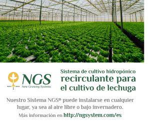 Expertos Debaten En Roma Un Plan Global Contra El Picudo Rojo De La Palma Sistemas De Cultivo Hidropónico Sistema De Cultivo Cultivos Hidroponicos