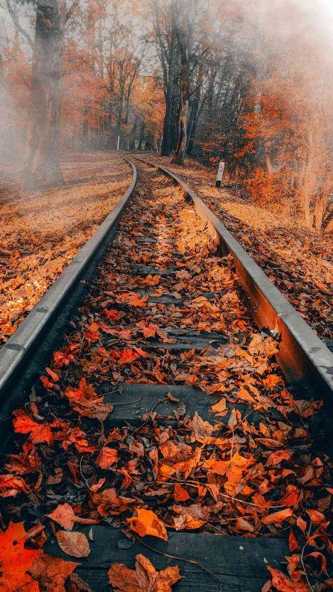 Railway Autumn Iphone Wallpaper In 2019 Autumn Phone