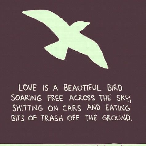 Love Bird Quotes Custom Quotes About Love Birds  Quotes Love  Pinterest  Bird