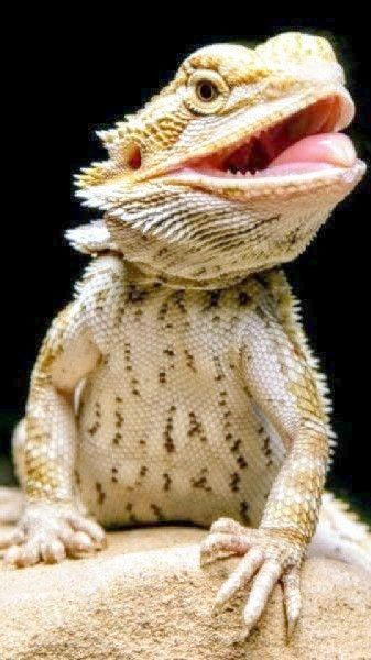 What Are Good Names For A Bearded Dragon