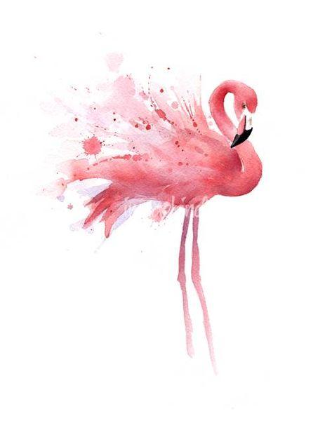 Flamingo by David Rogers