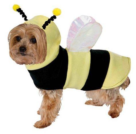 Rubies Costume Co Bumble Bee Wings Dog Costume Medium//Large