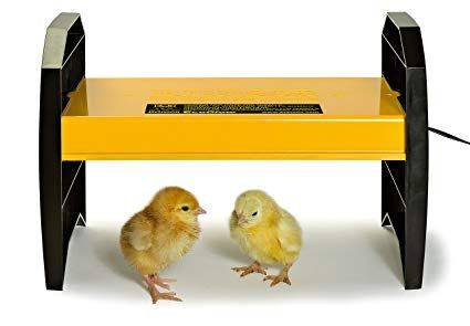 Radiant Heater For Chicks Chicken Brooder Chickens Backyard Baby Chickens