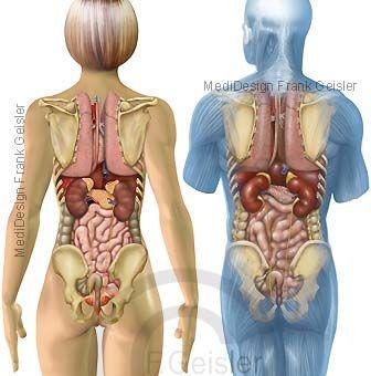 Einer frau körperbau Körperbau Frau
