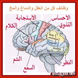وظائف كل من العقل والدماغ والمخ Blog Posts Blog Post