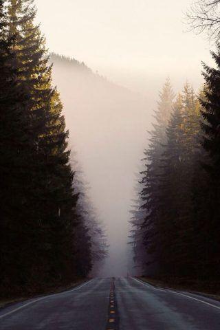 Misty Forest Road Pine Trees Iphone 6 Wallpaper Dengan Gambar