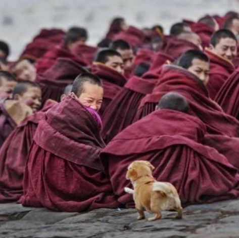 Photo by Tag someone you'd love to visit Tibet with! Baby Animals, Funny Animals, Cute Animals, Nature Animals, Wild Animals, Little Buddha, Tier Fotos, Jolie Photo, People Of The World