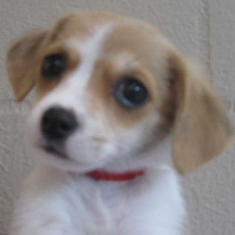 Adopt A Pet Dog Adoption Cat Adoption Animals
