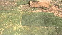 Grass Sod For Sale Near Me Find The Best Sod Farms Near You To Buy Grass Green Lawn