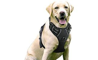 Dog Harness Vs Collar Dog Harness Therapy Dog Training