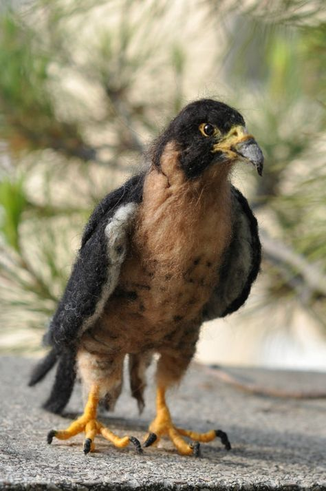 Needle Felted Animals/Peregrine Falcon/Soft by darialvovsky, $78.00