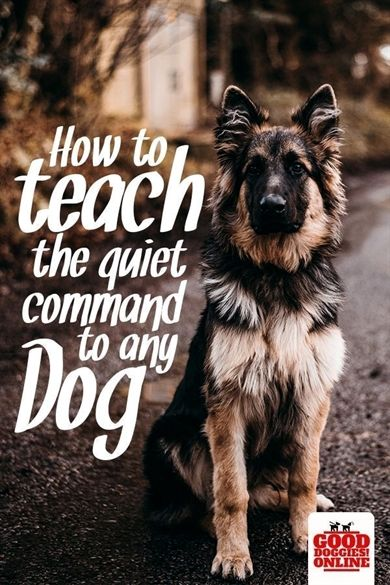 Pin On Dog Training Collars With Remote