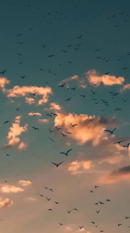 Bird Sky Pictures 34 Ideas For 2019 Aesthetic Wallpapers Landscape Wallpaper Cellphone Wallpaper