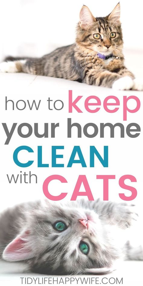 How to Keep a Clean House With Cats - Tidy Life Happy Wife Cat Care Tips, Pet Care, Pet Tips, Crazy Cat Lady, Crazy Cats, Cat Health Care, Chesire Cat, Cat Hacks, Cat Info