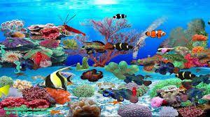 Resultat De Recherche D Images Pour Aquarium Anime Fond D Ecran Aquarium Anime Fond Ecran