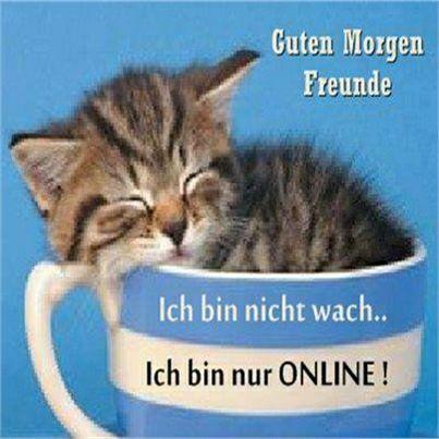 ACHTUNG - Du liebst Katzen? Du bist nur einen Klick entfernt von den besten und lustigsten T-Shirts für Katzenliebhaber! #katzen #katze #katzenmama #katzenliebhaber #katzenshirts #shirts #tshirts #geschenke #geschenkidee