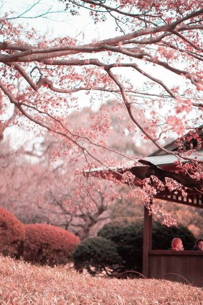 Most Underrated Japanese Cherry Blossom Spots Anime Cherry Blossom Cherry Blossom Wallpaper Cherry Blossom Pictures