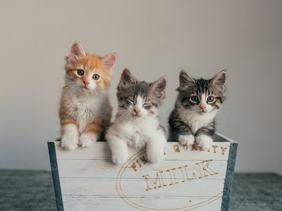 Raising Tiny Newborn Kittens Can Be Challenging Intensely Rewarding And Sometimes Heartbreaking This Article Gives Yo Newborn Kittens Kittens Kittens Near Me
