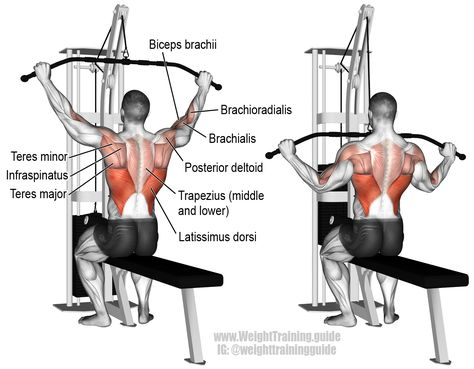 Wide grip lat pulldown. A compound exercise. Target muscle: Latissimus Dorsi. Synergists: Brachialis, Brachioradialis, Biceps Brachii, Teres Major, Posterior Deltoid, Infraspinatus, Teres Minor, Rhomboids, Levator Scapulae, Middle and Lower Trapezii, and Pectoralis Minor.