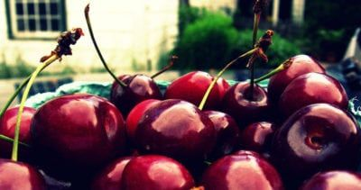 Ulster Cherry Info Learn About The Care Of Ulster Cherries Sweet Cherries Growing Tree Fruit