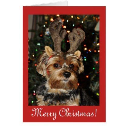 Christmas Blessings Yorkshire Terrier Dog Puppy Holiday Card Zazzle Com In 2020 Yorkshire Terrier Yorkshire Terrier Dog Dogs And Puppies
