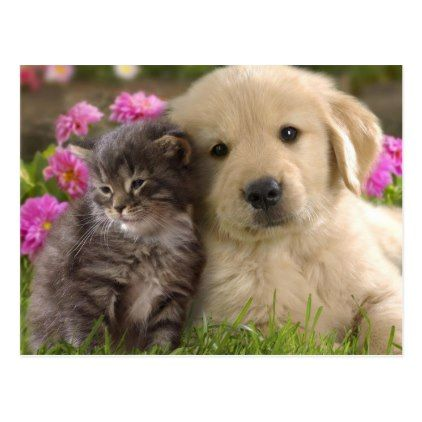 Cute Animals Postcard Zazzle Com Cute Cats And Dogs Kittens