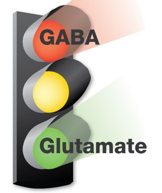 Balancing Your Glutamate Neurotransmitter Level Naturally ...