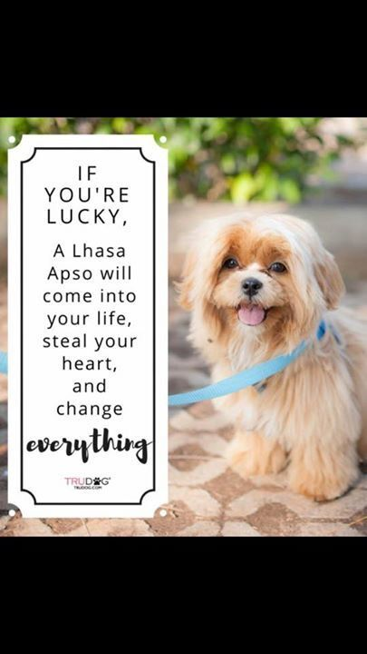 "I Love My Lhasa Apso 2/"" x 3/"" Refrigerator Locker MAGNET Dog Breed Canine Heart"