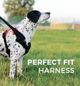 Home Page Dog Harness Dog Games Dogs