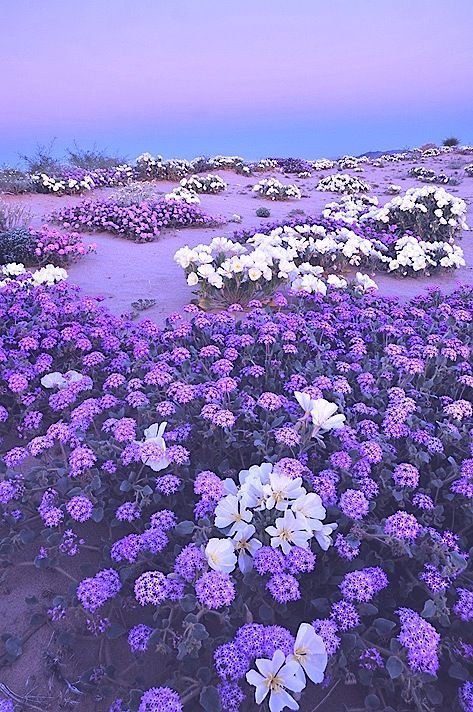 Maintaining A Flower Garden Is Even Painless Than Planting One Purple Garden Purple Flowers Nature
