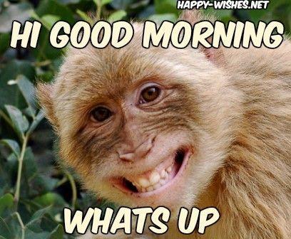 Pin On Funny Monkeys