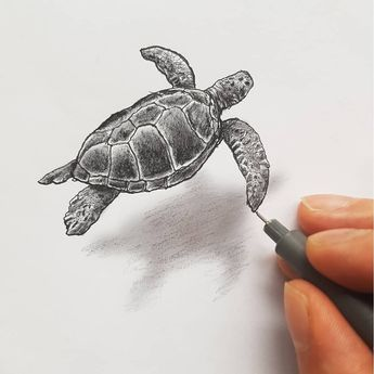 Various Styles Of 3d Drawings With Images Turtle Drawing 3d