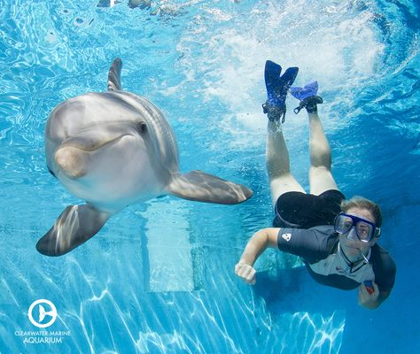 Check out Hope and her trainer, Julie Hope the Dolphin - marine mammal trainer sample resume