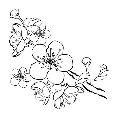 Blooming Cherry Sakura Branch With Flower Buds Black And White Art De Fleur De Cerisier Fleur De Cerisier Dessin Et Tatouage Cerisier